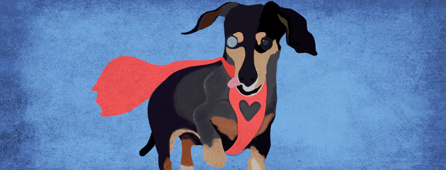 Ferdinand the dog poses for his portrait while his heart shaped harness has a cape blowing behind him.