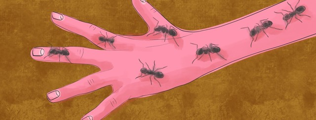 An arm, wrist, and hand covered in crawling ants, experiencing an itchy sensation.